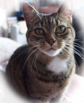 my textile cat